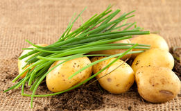 Potatoes and chives. Fresh potatoes and chives on wood Royalty Free Stock Photos