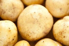 Potatoes close-up Stock Photo