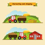Potatoes .Collection and delivery of the crop. Vector illustrati. On Stock Photo