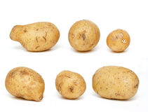Potatoes of different size and shape Royalty Free Stock Photography
