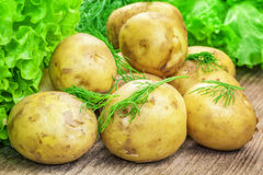 Potatoes with dill. And lettuce leaves Royalty Free Stock Photography