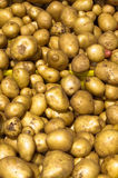 Potatoes on display Stock Images