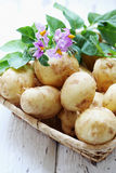 Potatoes with a flower Royalty Free Stock Photos