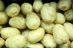 Potatoes. Fresh potatoes in the market Royalty Free Stock Image