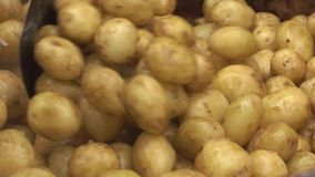 Potatoes fry on the large pen stock footage