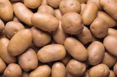 Potatoes - full frame. Red potatoes - a full frame Stock Photography