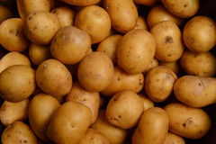 Potatoes-Goodly new potatoes Royalty Free Stock Images