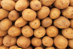 Potatoes are a great harvest Stock Photography