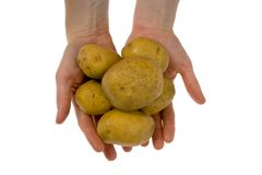 Potatoes in hand isolated. Some potatoes in hand isolated on white background royalty free stock images
