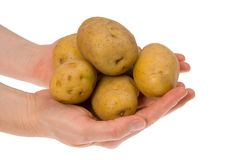 Potatoes in hand isolated. Some potatoes in hand isolated on white background stock photos