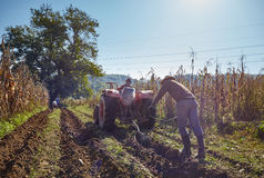 Potatoes harvest Royalty Free Stock Images