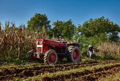 Potatoes harvest Royalty Free Stock Photos