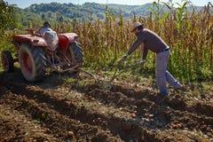 Potatoes harvest Royalty Free Stock Image