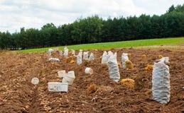 Potatoes harvest Stock Photography