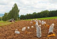 Potatoes harvest Stock Photos