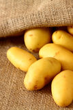 Potatoes hessian sack 3. Fresh potatoes on a hessian sack royalty free stock image