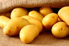Potatoes hessian sack 2 Royalty Free Stock Images