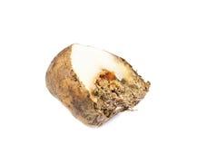 Potatoes infected Stock Photos