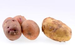 Potatoes isolated on white Royalty Free Stock Image