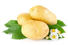 Potatoes with leaves and flower Stock Photos