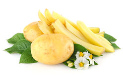 Potatoes with leaves and flower Stock Image