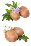 Potatoes with leaves and flowers Stock Photos
