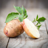 Potatoes with leaves Royalty Free Stock Photos