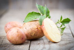 Potatoes with leaves Stock Images