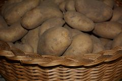 Potatoes. A many potatoes in a basket royalty free stock images