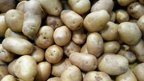 Potatoes. Many potatoes Stock Images