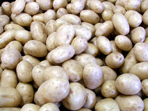 Potatoes at market. Potatoes on the market stand stock image