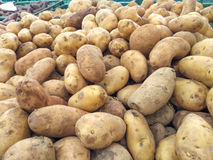 Potatoes at market. Large pile or stock of potatoes at market stock images