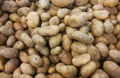 Potatoes in the market. Many raw brown beige potatoes royalty free stock image