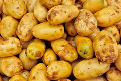 Potatoes in market Royalty Free Stock Image