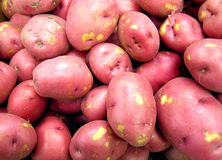 Potatoes at the market Stock Photography