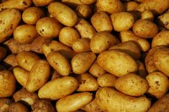 Potatoes at a market stand. A pile of potatoes at a market stand Stock Image