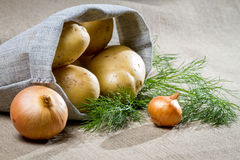Potatoes and onion with dill Stock Images