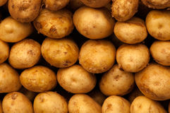 Potatoes. Photo of new potatoes background Royalty Free Stock Images