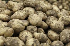 Potatoes Stock Image