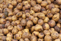 Potatoes Piled at Ecuador farmers market Royalty Free Stock Photos