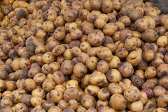 Potatoes Piled at Ecuador farmers market Stock Photography