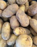 Potatoes piled together a variety of sizes. stock image