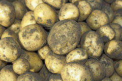 Potatoes raw vegetables food Stock Photos