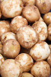 Potatoes raw vegetables food Stock Photography