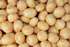 Potatoes raw vegetables Stock Images