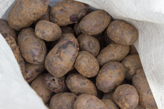 Potatoes raw vegetables Royalty Free Stock Image