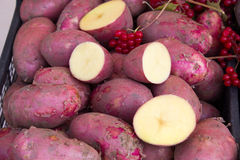 Potatoes raw vegetables food Stock Images