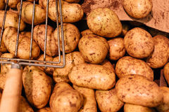 Potatoes raw vegetables food in market Stock Image