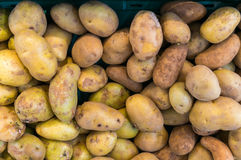 Potatoes raw vegetables food in market for pattern texture and b Royalty Free Stock Image