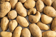 Potatoes raw vegetables food in market for pattern texture and background Royalty Free Stock Images